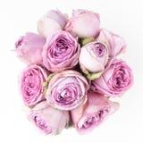 vita rosa ro för bakgrund Top beskådar Royaltyfri Bild