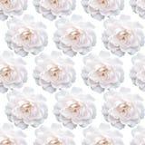Vita Rose Pattern härlig blommaträdgård Blom- backgroun Arkivbilder