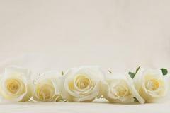 Vita rosor från sidosikt Arkivbilder