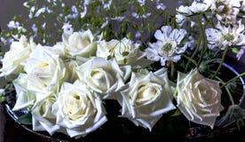 Vita rosor i en mörk bunke Royaltyfri Fotografi