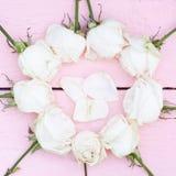 Vita rosor och kronblad Royaltyfri Fotografi