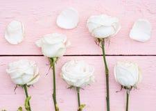 Vita rosor och kronblad Royaltyfri Bild