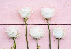Vita rosor på en rosa färg Royaltyfri Foto