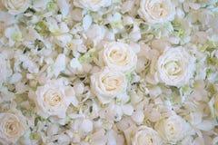 Vita rosor som är användbara för bakgrund Royaltyfri Fotografi