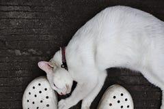 Vita rubs för en katt mot på fot Royaltyfria Foton