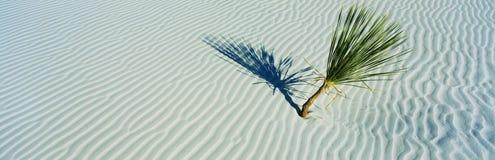 Vita sanddyner med den enkla palmträdet Royaltyfri Foto