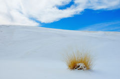 Vita Sands, NM Arkivfoton