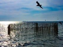 Vita Seagulls flyger i himlen som svävar i havet, och några av dem är på filialerna arkivbilder