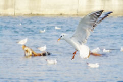 Vita seagulls nära stöttar Royaltyfri Bild