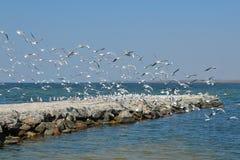 Vita seagulls rotera över havet royaltyfri foto