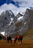 Vita selvaggia della montagna Fotografie Stock