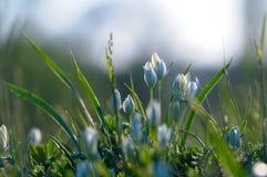 Vita små blommor i gräset Bakgrund Härlig backgrou Royaltyfri Fotografi