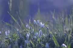 Vita små blommor i gräset Bakgrund Härlig backgrou Arkivfoton