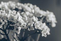 Vita små blommor på rum på solnedgången Royaltyfri Fotografi