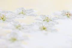 Vita små blommor på vattnet yellow för modell för hjärta för blommor för fjärilsdroppe blom- Gifta sig vårbakgrund Makro Royaltyfria Foton