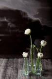 Vita smörblommor i flaskorna Royaltyfri Bild