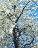 Vita sommarblommor Arkivfoto