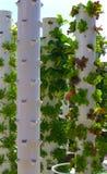 Vita sostenibile della torre del giardino Fotografie Stock Libere da Diritti