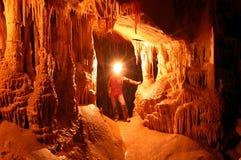 Vita sotterranea Fotografia Stock