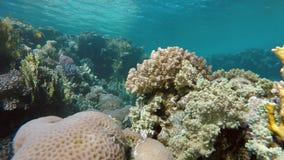 Vita sotto l'acqua Tuffandosi su una scogliera tropicale video d archivio