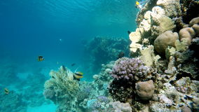 Vita sottomarina Bella barriera corallina video d archivio