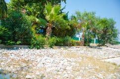 Vita stenar nära palmträd, stenig strand royaltyfri foto