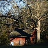 Vita stolträd för rött skjul arkivfoton
