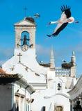Vita storkar i Faro, Portugal Arkivfoton