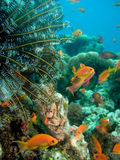 Vita subacquea Immagini Stock Libere da Diritti