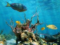 Vita subacquea di mare e del modulo Immagini Stock