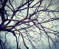 Vita sull'albero Fotografia Stock Libera da Diritti