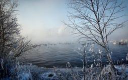 Vita svanar och änder som simmar på vattnet Royaltyfria Foton