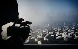 Vita svanar och änder som simmar på vattnet Arkivbilder