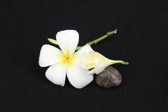 vita svarta blommor för bakgrund Royaltyfri Fotografi