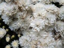 vita svarta blommor för bakgrund Arkivbilder