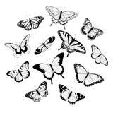 vita svarta fjärilar Fotografering för Bildbyråer