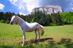 vita svarta hästar Arkivbild
