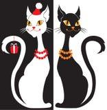 vita svarta katter Arkivbild