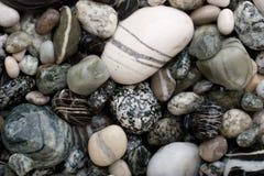 vita svarta pebbles Arkivfoto