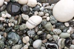 vita svarta pebbles Arkivfoton