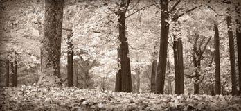 vita svarta trees för höst Arkivfoton