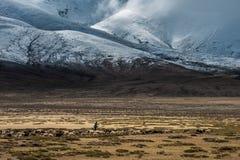 Vita tibetana Immagine Stock