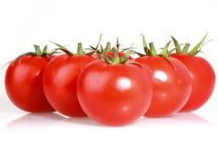 vita tomater Arkivbild