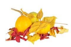 vita torra isolerade orange pumpor för leaves Royaltyfri Bild