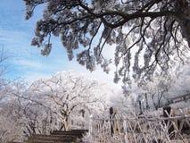 Vita träd och vitstaket Fotografering för Bildbyråer