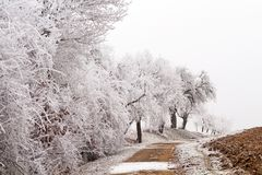 Vita träd på en landsgränd Arkivfoton