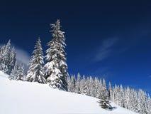vita trees Arkivfoton