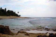 Vita tropicale fotografia stock