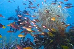 Vita tropicale della scogliera, baia di Sogod, Leyte, Filippine fotografia stock