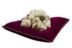 Vita tryfflar från Piedmont Italien Royaltyfri Foto
